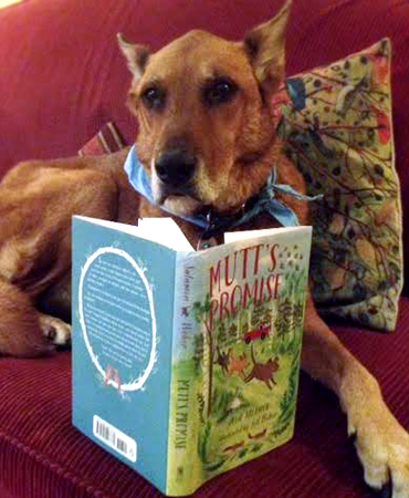 The author's dog, Maggie, enjoying her copy of Mutt's Promise!